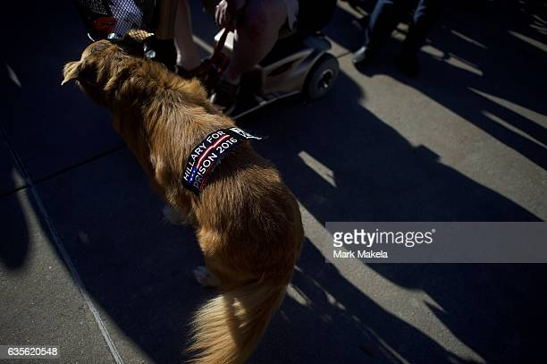 A dog wears a 'Hillary for Prison 2016' sticker outside Giant Center before a rally for Republican Presidential nominee Donald J Trump November 4...