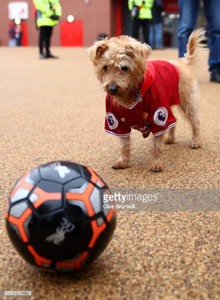 A dog wears a Liverpool shirt prior to the Premier League match between  Liverpool and Everton d0d7e99e3