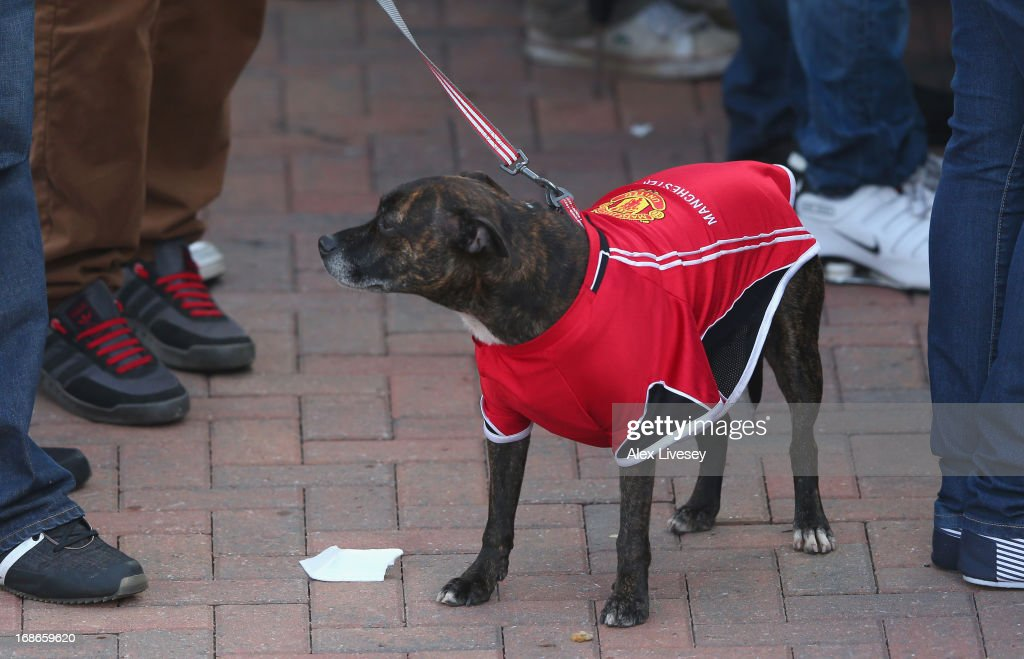 A Dog Wears A Manchester United Coat At Old Trafford During
