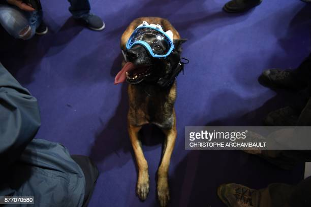 A dog wears a mask equipped with cameras and a transmission device developped by the French surveillance SSI Groupe and allowing the human partner to...