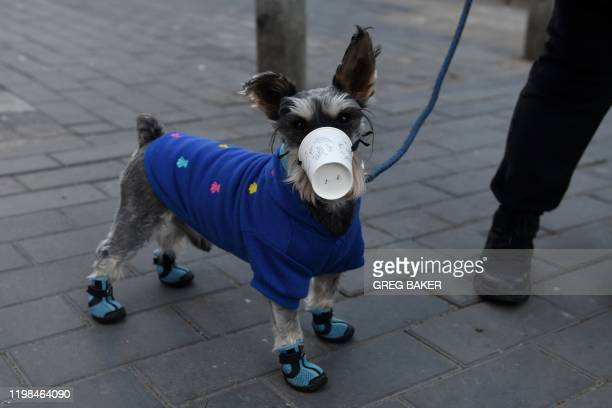 TOPSHOT A dog wears a paper cup over its mouth on a street in Beijing on February 4 2020 The number of total infections in China's coronavirus...