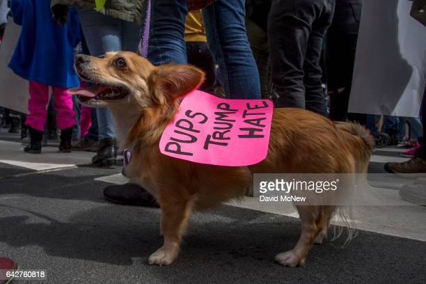 A dog wears a sign during the Immigrants Make America Great March to protest actions being taken by the Trump administration on February 18 2017 in...