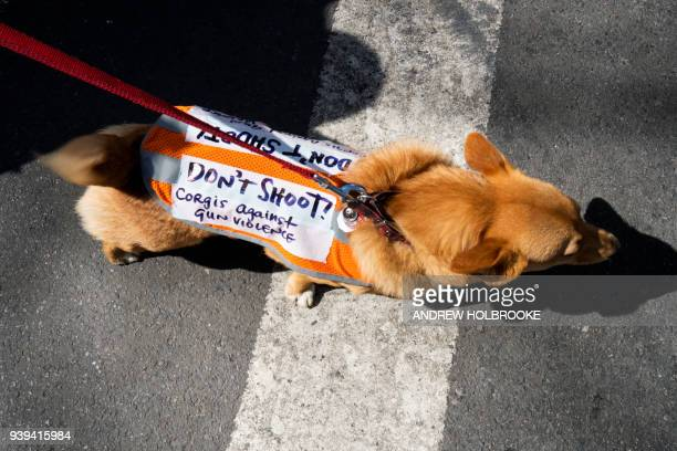 A dog wears a sign during the March For Our Lives on March 24 2018 in New York City Thousands of people across the country marched in support of...
