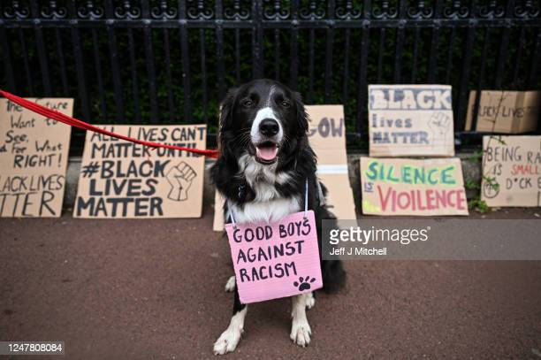 A dog wears a sign saying Good boys against racism as Black Lives Matter protesters hang their banners on the fence of Holyrood Palace despite a call...