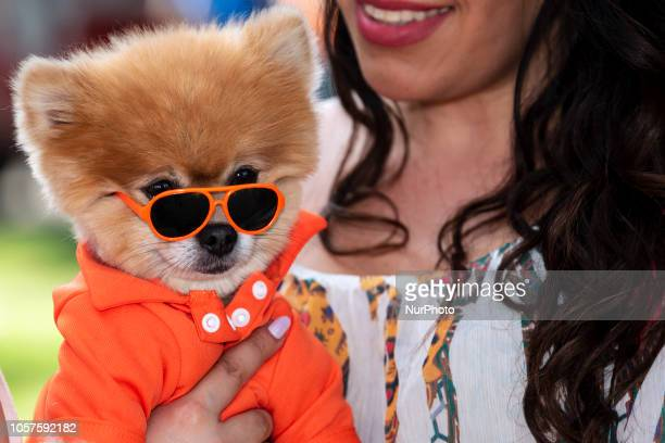 A dog wears sunglasses at Woofstock 90210 a dog festival in Beverly Hills California on November 4 2018 The annual event for dogs and their owners...
