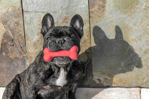 Dog with a bone - gettyimageskorea