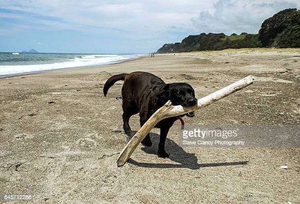 Dog with a branch