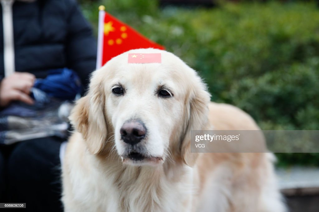 A dog with a chinese national flag sticker on head seen outside the stadium before the