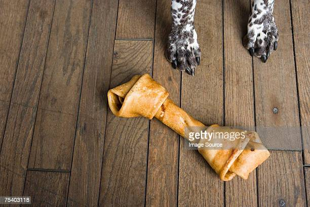 Cão com um cão Mastigar