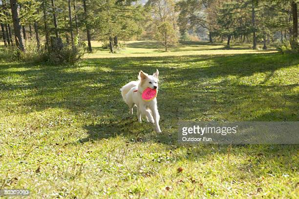A dog with a frisbee