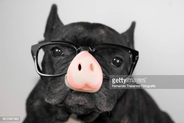 Dog with a pig's nose