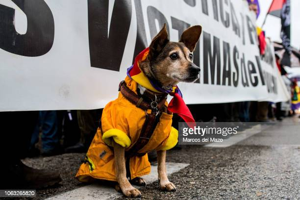 A dog with a republican flag round its neck during a protest at the Valley of the Fallen against the possible exhumation and transfer to the...