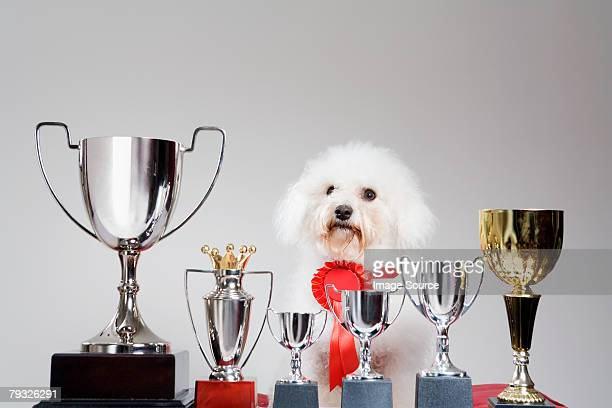 Dog with a row of trophies