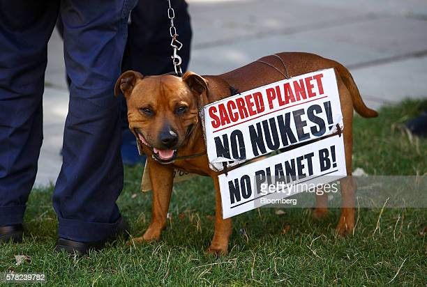 A dog with a sign hanging over it protesting against Trident nuclear missiles stands with its owner near to the Houses of Parliament in London UK on...
