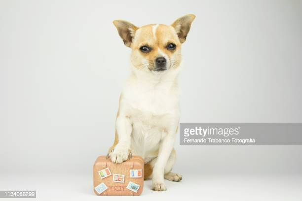 Dog with a suitcase to go on vacation and relax