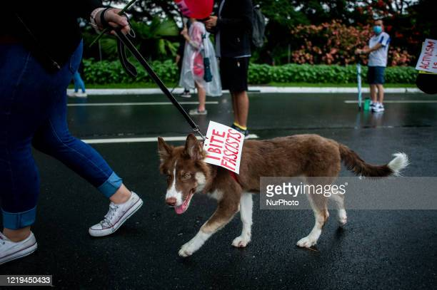 A dog with a tag quotI Bite Fascistsquot joins a protest against the AntiTerror Bill on June 12 2020 at the University of the Philippines in Quezon...