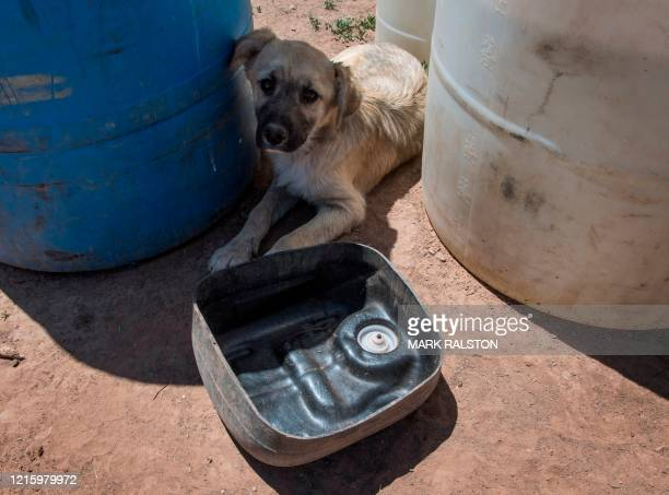 Dog with an empty water bowl outside his home near the Navajo Nation town of Fort Defiance in Arizona on May 22, 2020. - According to the Centers for...