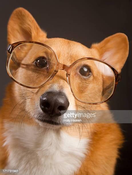 Dog with bifocals