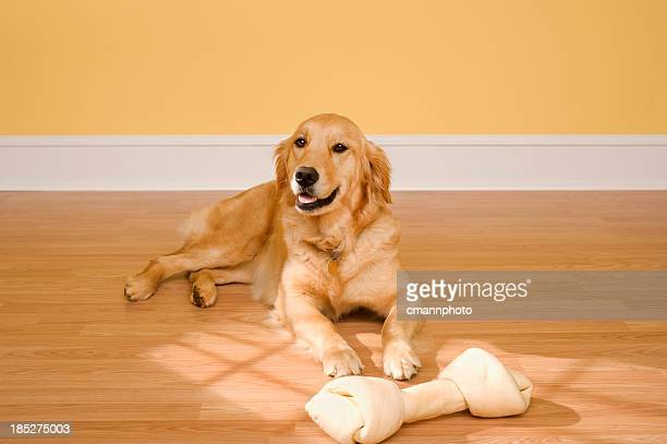 Dog with bone