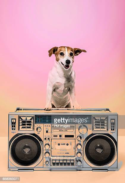 Dog with BoomBox