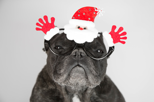 Dog with christmas glasses - gettyimageskorea