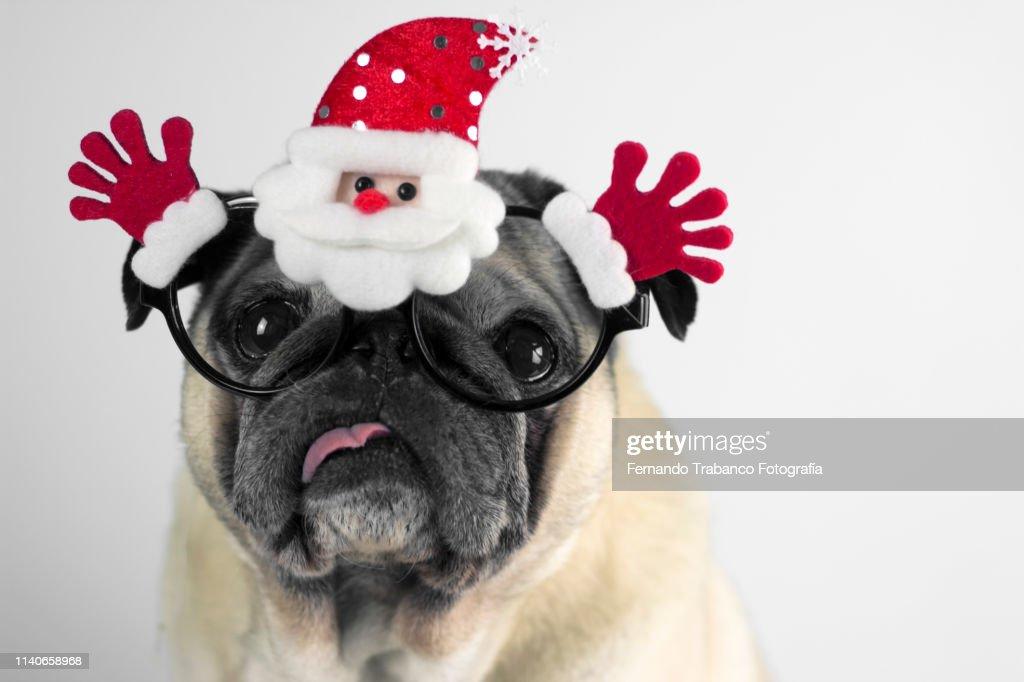 Dog with christmas glasses : Stock Photo