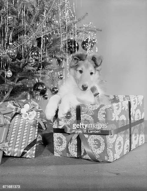 dog with christmas tree and gifts - {{relatedsearchurl(carousel.phrase)}} ストックフォトと画像