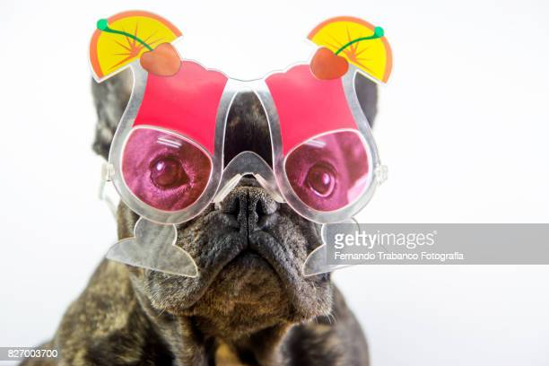 dog with cocktail glasses - funny birthday stock photos and pictures