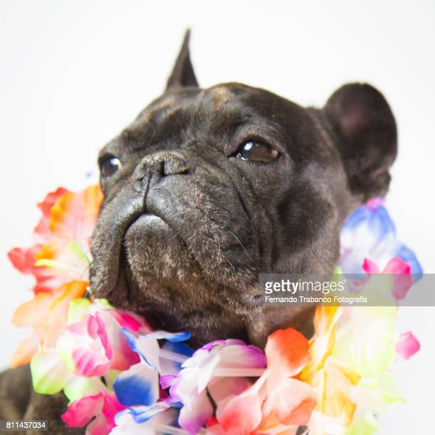 Dog with colorful flower necklace
