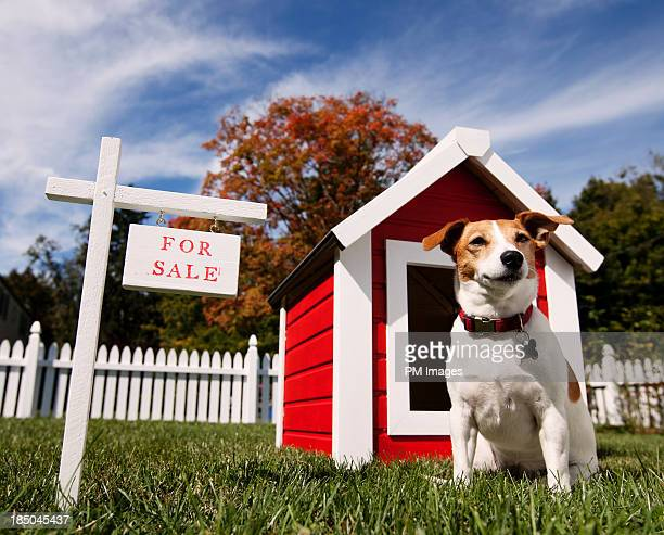 Dog with dog house for sale