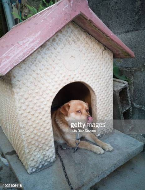 dog with dog house