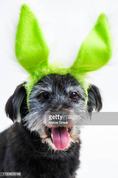 dog with easter bunny ears - dog easter stock pictures, royalty-free photos & images