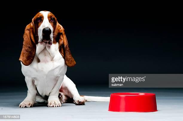 Cão com Tigela vazia