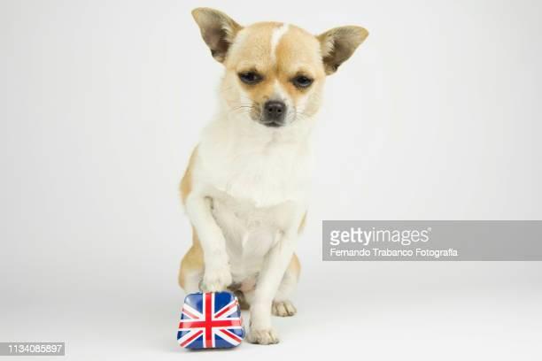 Dog with English suitcase