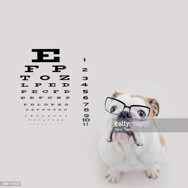 dog with eyeglasses in the optician