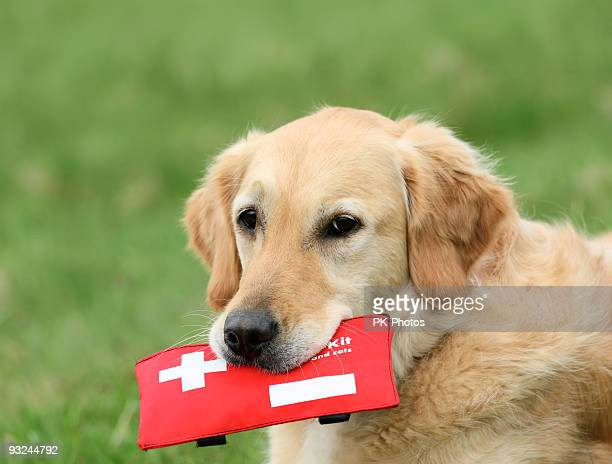 dog with first-aid-kit - first aid kit stock pictures, royalty-free photos & images