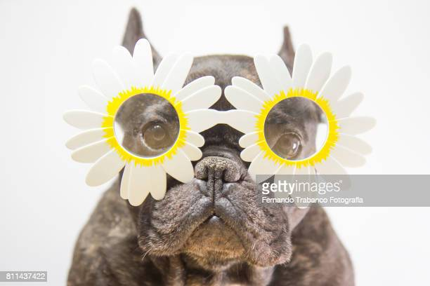 Dog with flower-shaped glasses