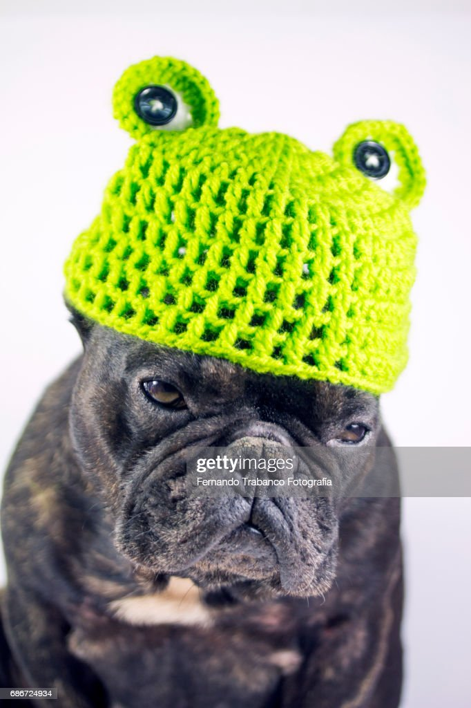Dog with frog costume, green hat with frog eyes : Stock Photo