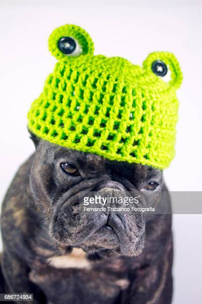 Dog with frog costume, green hat with frog eyes