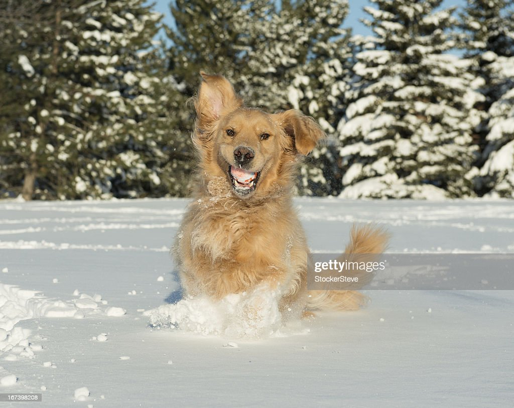 Dog with Funny Face in Snow : Stock Photo