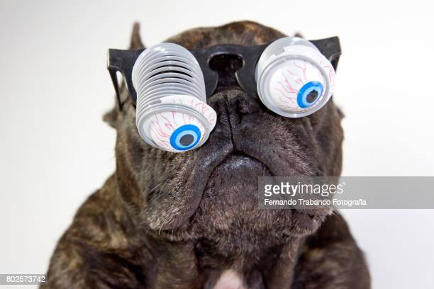 Dog with glasses and bulging eyes