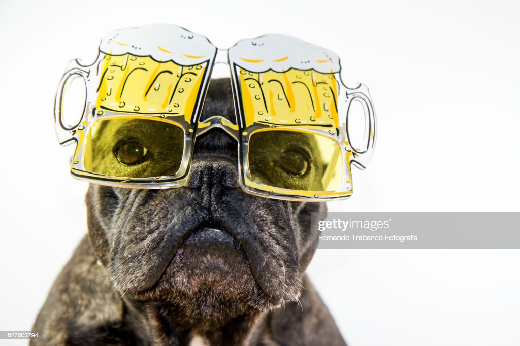 Dog with glasses of beer : Stock Photo