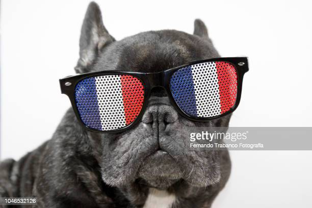 dog with glasses of french flag - cultura francesa - fotografias e filmes do acervo