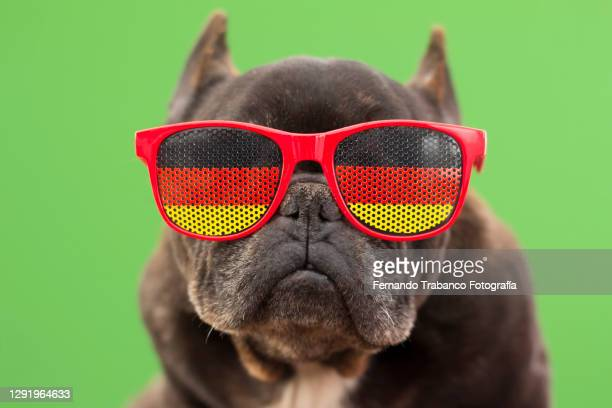 dog with glasses of german flag - germany stock pictures, royalty-free photos & images