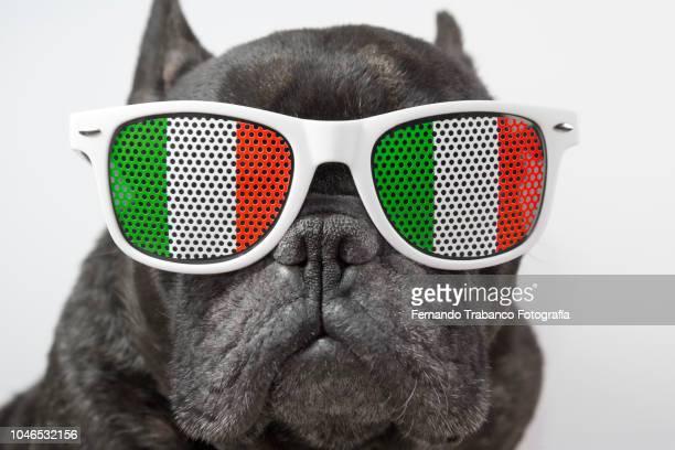 dog with glasses of italian flag - bandera italiana fotografías e imágenes de stock