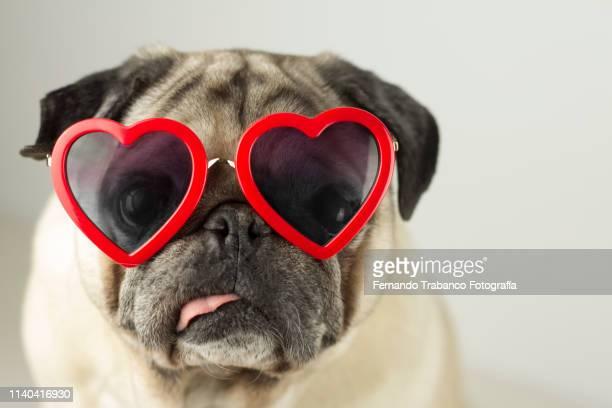 dog with glasses of red heart - valentines day imagens e fotografias de stock