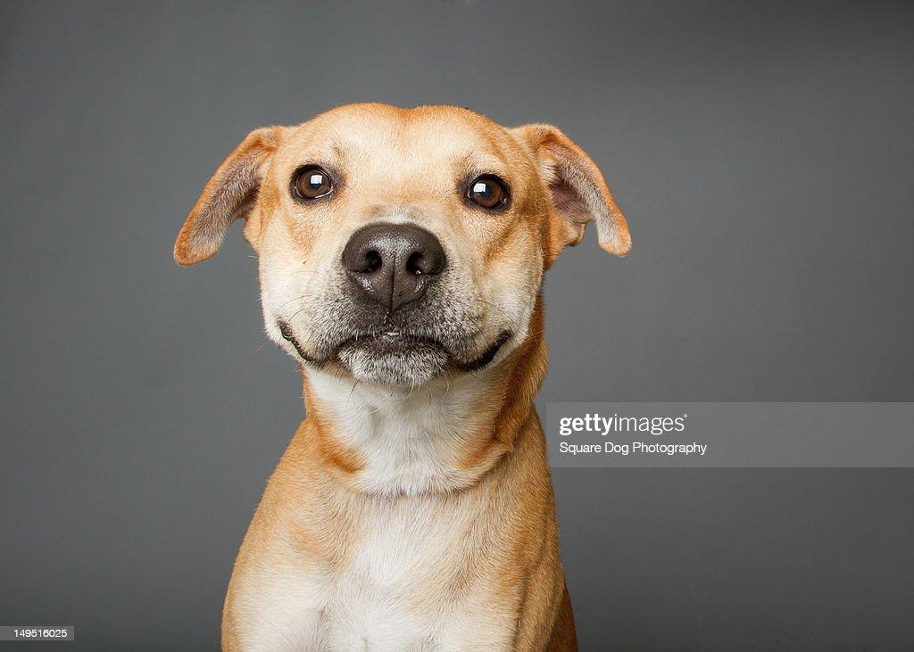 Dog with goofy smile : Stock Photo