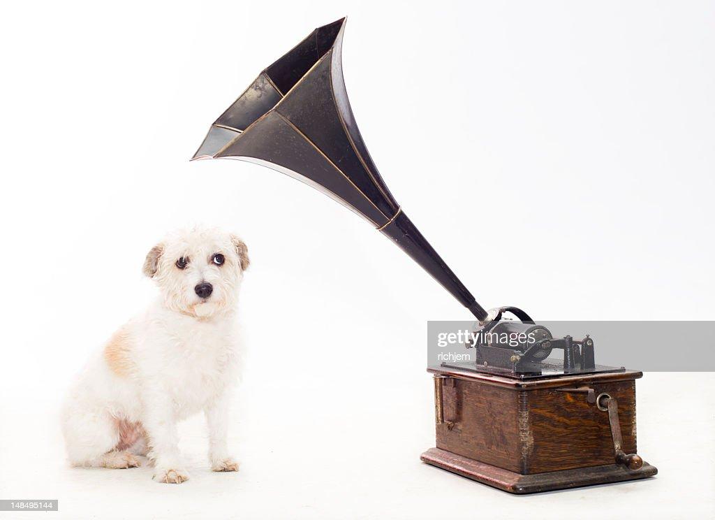 dog with gramaphone : Stock Photo