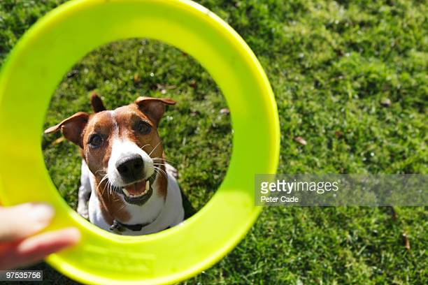 dog with green toy - pet owner stock pictures, royalty-free photos & images
