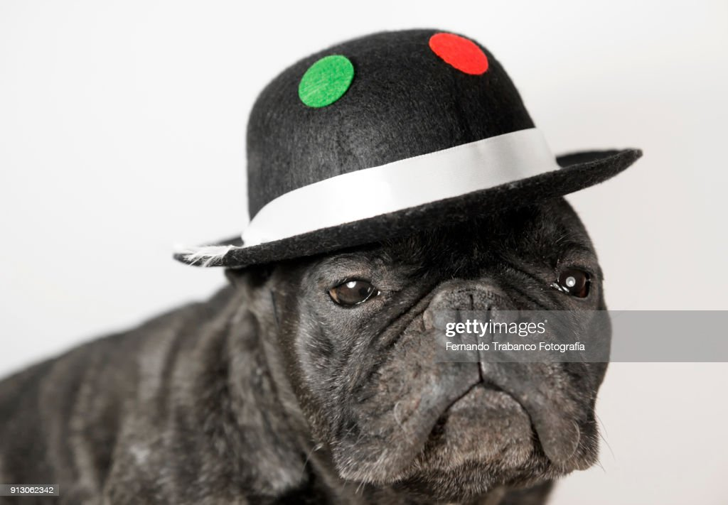 Dog with hat : Stock Photo